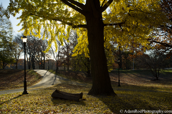 A late autumn stroll through Prospect Park